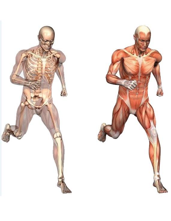 Športová fyzioterapia
